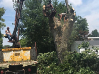 tree removal Pittsburgh, PA